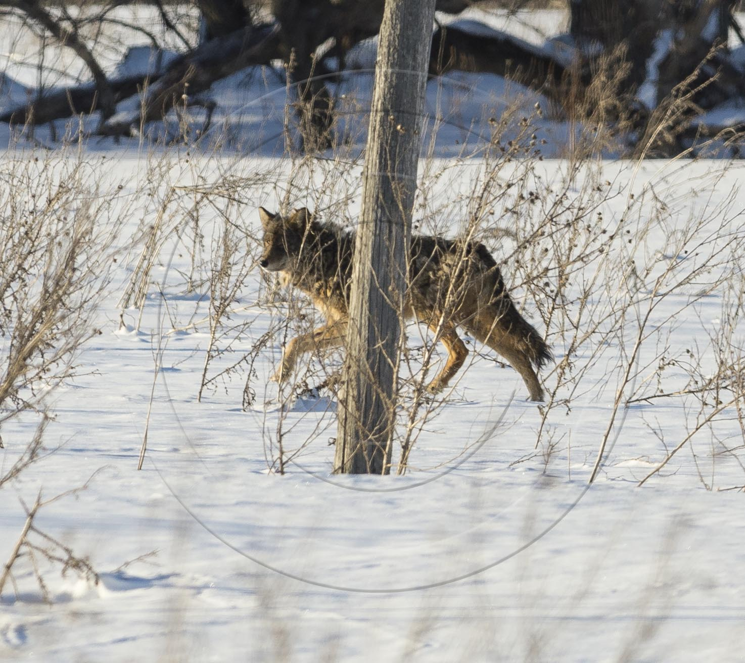 Coyote Airport-1