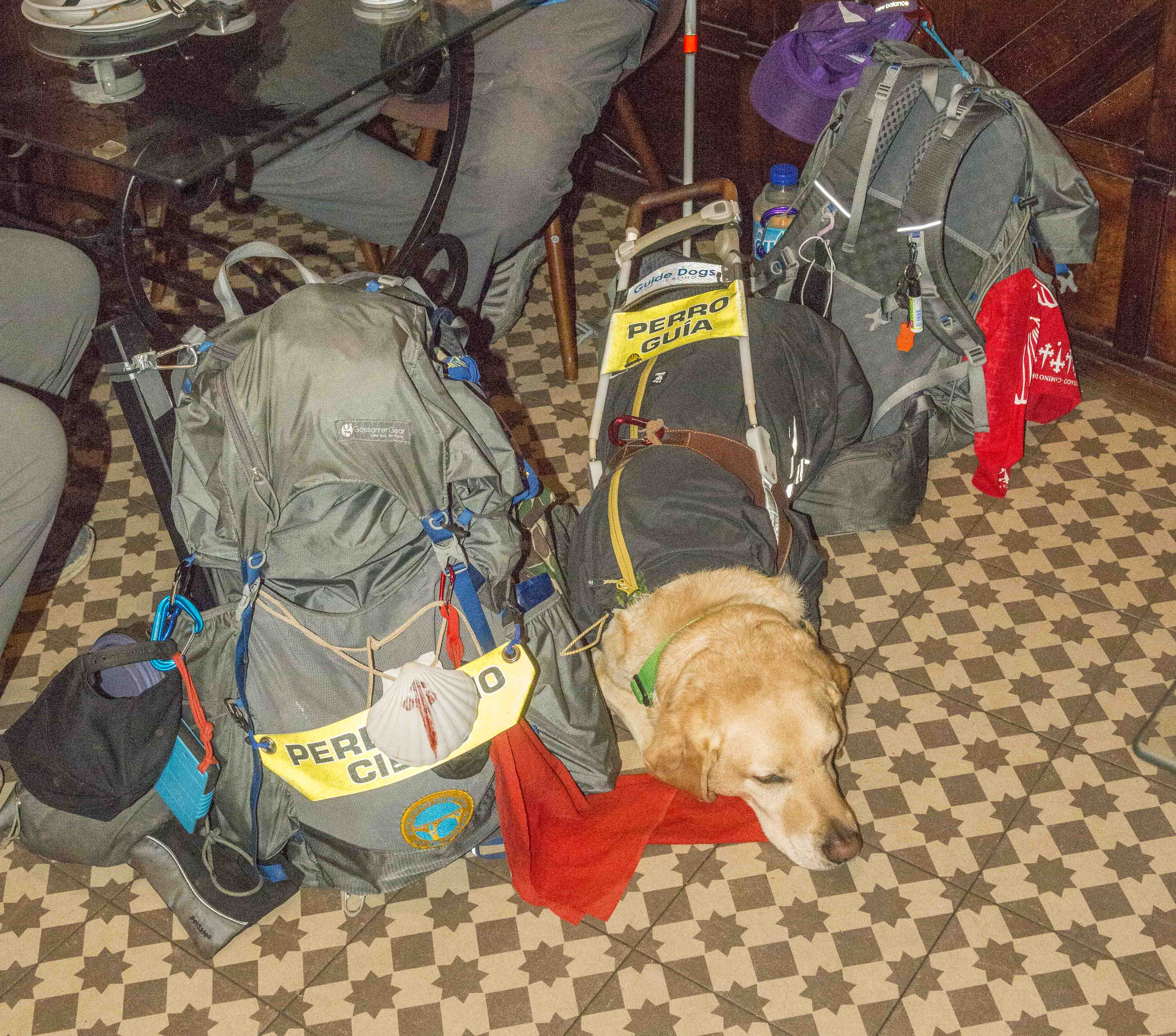 guide-dog-1